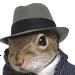 :squirrel: